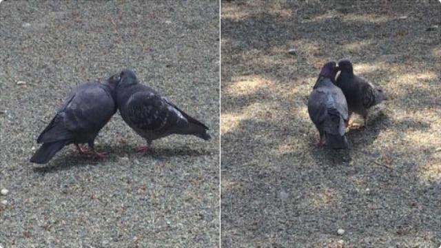 ポッポッポォ ハトポッポォ 豆が欲しいか、そr・・・でもここの地主さん『鳩にエサをあげないで』って言ってるからダメなんだ、ゴメンな。