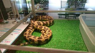 蛇カフェいってきた