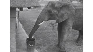 【戒め】ゴミはゴミ箱へ 人間のモラルは野生のゾウ以下であることが証明される
