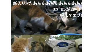 野良猫いっぱい 家の裏に集まるネコたちを眺めるだけのニコ生「リアルねこあつめ」