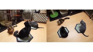 これには猫様もホイホイですにゃ 話題の「ネコ転送装置」が京都の老舗畳店によって商品化