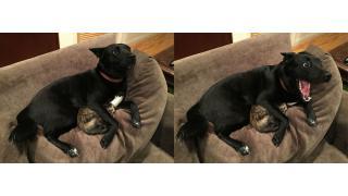 雷に怯えるネコを優しく抱きしめるイヌの顔がヤバイと話題に→コラ画像にされる