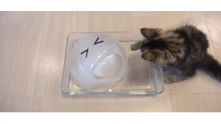 10匹のネコ一家に大きな氷のボールをプレゼント ひんやりして気持ちいいですにゃ〜