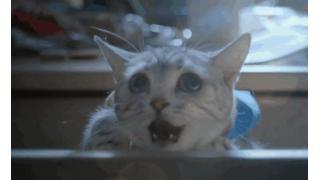 本物のネコがドラちゃんを演じる実写映画「ドラえもん」が中国で製作中!? ウルトラマンっぽい何かもいる模様