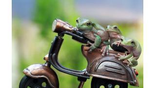 スクーターに3人乗りするカエルたちが超かわいい!みんなで仲良くツーリングかな?