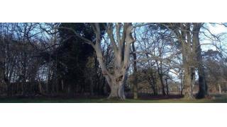 定番クリーチャー「トレント」は実在した!? イギリスで悪魔が取り憑いたかのような木が発見される