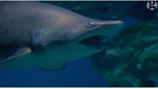 「ビッグシャーク vs リトルシャーク」これが弱肉強食の掟……海外の水族館で「サメ映画」みたいなバトルが繰り広げられた模様