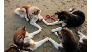 【ほのぼの】犬が作ったかわいい十字キー