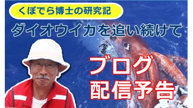 窪寺博士のダイオウイカ研究記  ブログ配信開始のお知らせ