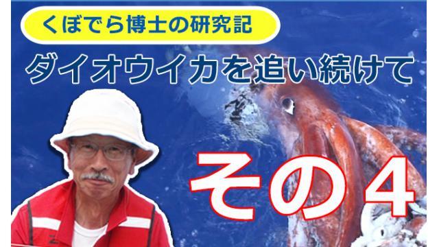 窪寺博士のダイオウイカ研究記-その4