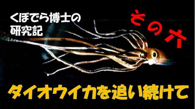 窪寺博士のダイオウイカ研究記 - その6