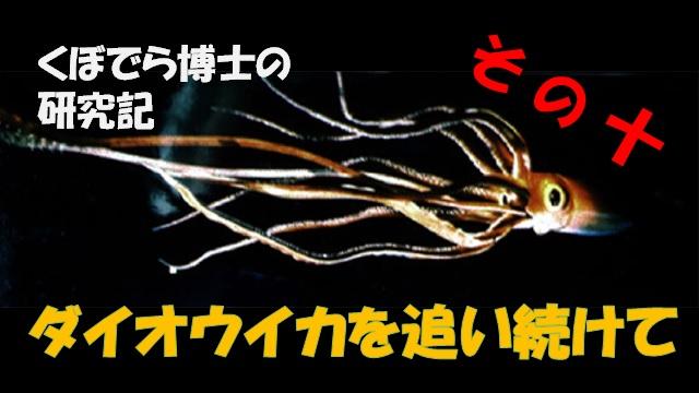 窪寺博士のダイオウイカ研究記-その10