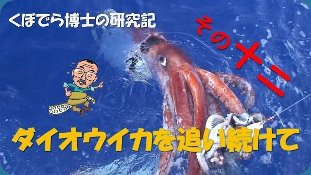 窪寺博士のダイオウイカ研究記-その12