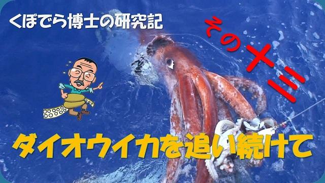 窪寺博士のダイオウイカ研究記-その13