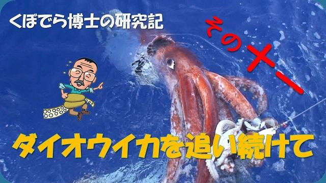 窪寺博士のダイオウイカ研究記-その11