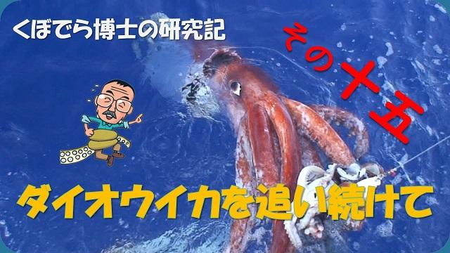 窪寺博士のダイオウイカ研究記-その15