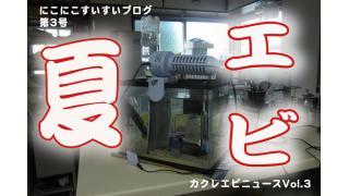 キッチンのエビNEWS  vol2〜真夏のエビとの付き合い方〜