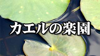 ブロマガ配信小説『カエルの楽園』第九回