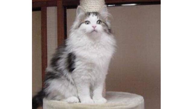 【猫】TS予約はお済みかにゃ?????【画像大量】