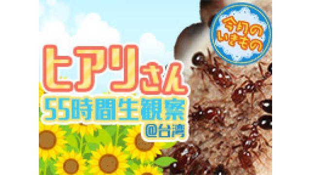 【今月のいきもの★夏休みSP】ヒアリさん55時間生中継@台湾