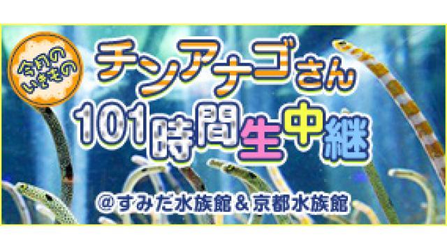 【11月】チンアナゴさん101時間生中継@すみだ水族館&京都水族館