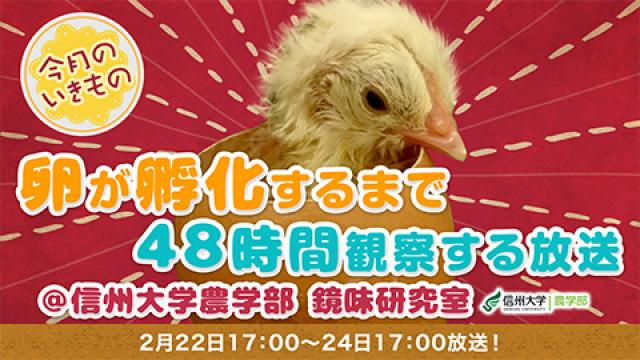鶏の卵が孵化するまで48時間観察する放送@信州大学農学部【今月のいきもの】