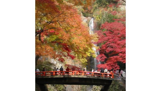 【大人の隠れ家】大阪・箕面の山中で紅葉を楽しめるおすすめ隠れ家カフェ「ゆずりは」を紹介!