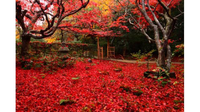 【大人の隠れ家】京都の穴場!真っ赤に染まる紅葉の隠れた名所「厭離庵(えんりあん)」を紹介!