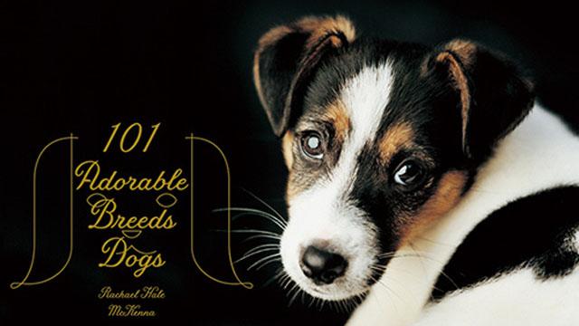 犬好きにはたまらない!!世界各地の犬が101匹収録された写真集『世界の美しい犬101』発売!