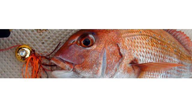 【大人の趣味道:アウトドア編】釣れればめでタイ!高級魚マダイを船から釣る「鯛ラバ」を紹介!