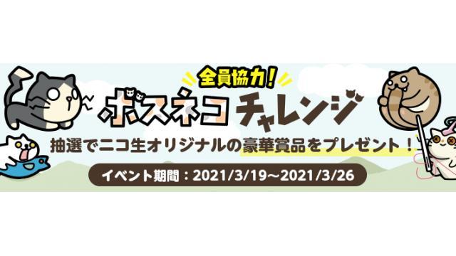 『全員協力!ボスネコチャレンジ』開催!!