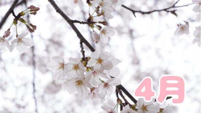 【全体公開】4月の予定(●`ω´●)