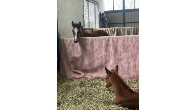 2021年度飼養馬キャラ設定