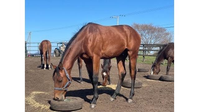 繁殖牝馬の管理