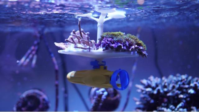 サンゴの共生から未来の人間を考える | 草野絵美