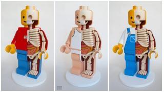 生物室にあったら...。怖ゴアかわいいレゴ人体模型