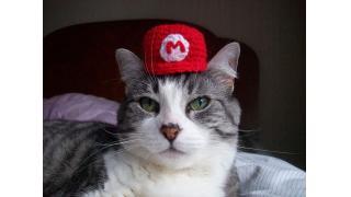 カワイイにもほどがある! ハンドメイドの猫ちゃん用『スーパーマリオ』帽子