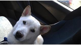 犬がニンテンドー3DSを食べる時(ギャラリーあり)