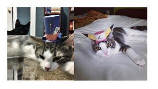 このカワイさ、圧倒的。次に流行する猫ファッションは小さな紙帽子!
