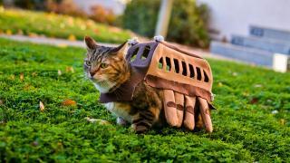 夢じゃなかった! 本物のネコによるネコバスのコスプレ