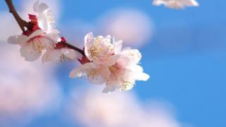 【有料記事】祝福と解放の聖なる瞬間を『ピアノの森』に見た。(1355文字)