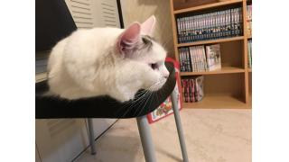 【nyanny AKIBA】夜の猫スタッフは撮影に協力的である【癒やし】#nyanny #猫カフェ