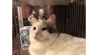 【nyanny AKIBA】東北旅行で癒された後に、更に癒されてみた【癒やし】 #nyanny #猫カフェ