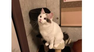 【nyanny AKIBA】猫カフェのルールを再確認とnyannyAKIBA攻略法を書いてみる【癒やし】 #nyanny #猫カフェ