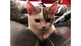 【2019/8/24更新】【ねこぱんち】大和市初の猫カフェに行ってみた!【癒やし】