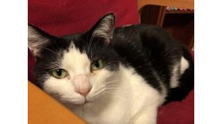 【nyanny AKIBA】師走のnyannyAKIBAの猫スタッフは活発である【癒やし】 #nyanny #猫カフェ #アキバのお店