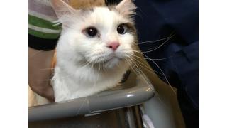 【猫カフェ】nyannyAKIBA×みにちゃんねる 特典終了のお知らせ【癒やし】