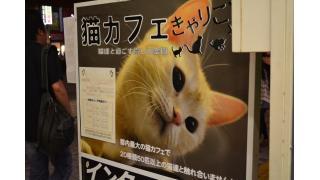 【猫カフェ】きゃりこ 新宿店へ行ってきました!【癒やし】