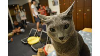 nyanny & きゃりこ 猫スタッフ プチ写真集。