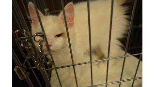 【nyanny】新しい猫ちゃん。その名はみにたん!?